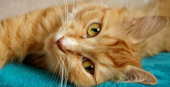Are Cats Happy When They Purr – The Myths and Magic Of Purring