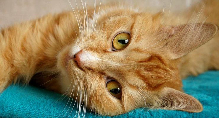 Happy Cat Purring – Listen And Discover What Your Cat's Purr Means