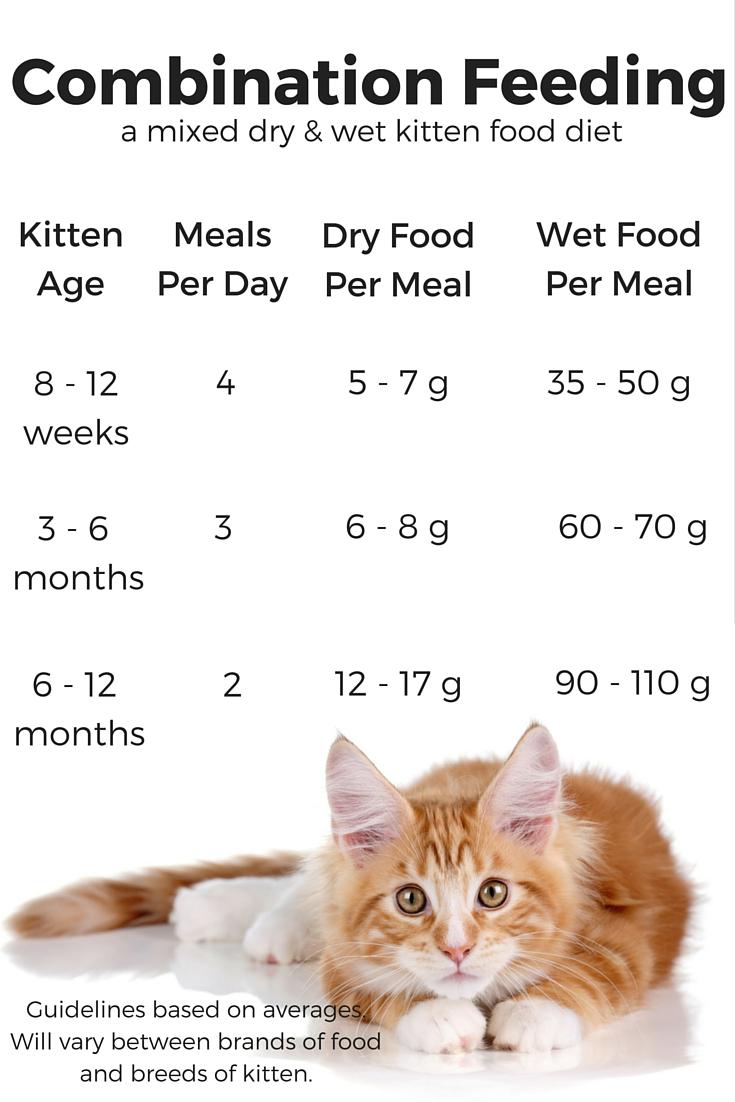 combi kitten food chart