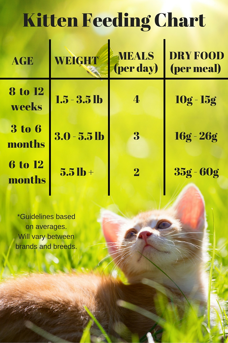 Feeding Your Kitten Helpful Kitten Feeding Schedules And Charts
