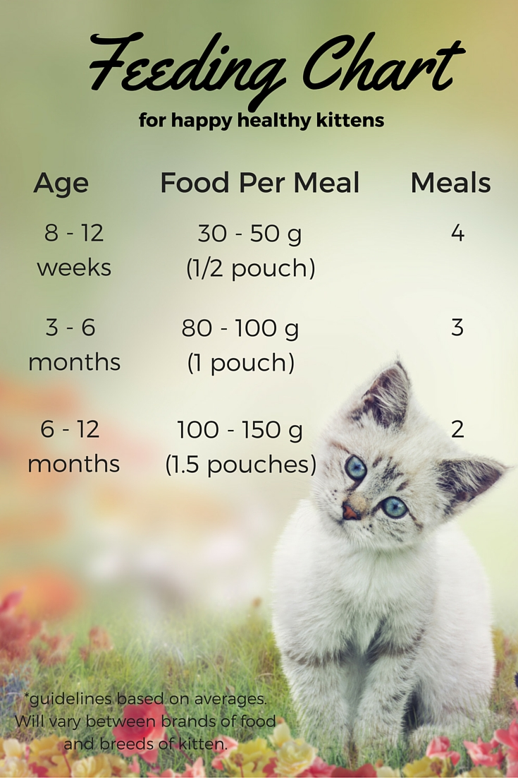 wet kitten food chart