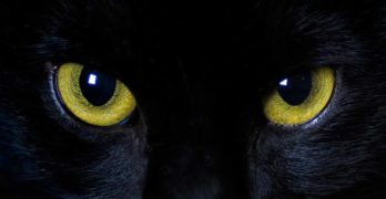 Can cats see in the dark