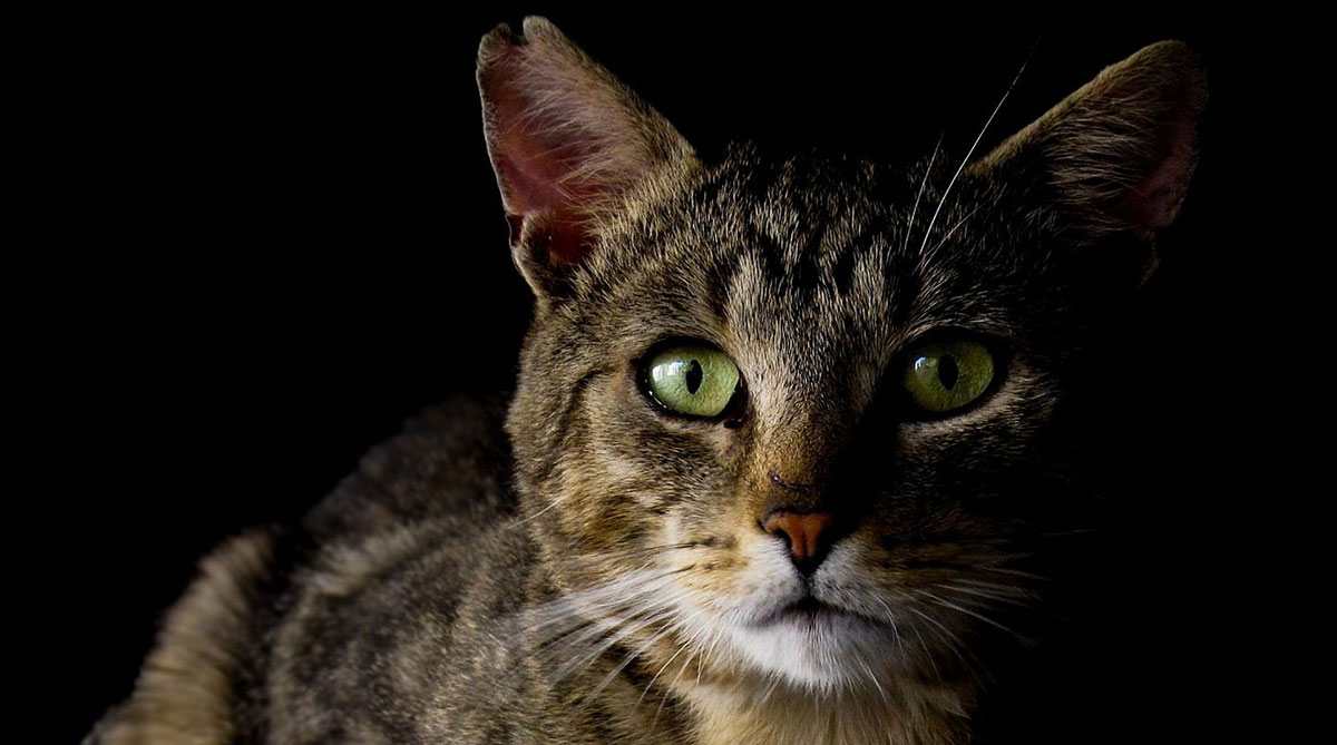 Can Cats See In The Dark? - The Happy Cat Site