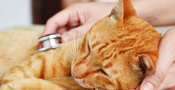 Cat Flu: Symptoms Treatment And Care