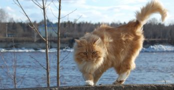 Why Do Cats Wag Their Tails – A Guide To Cat Tail Language