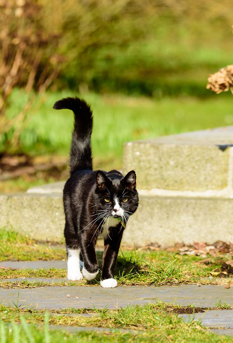 What does it mean when cats wag their tails? This guide to cat tail language explains