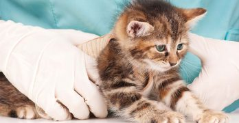 Cat Worms: Symptoms and Deworming Information For Cats and Kittens