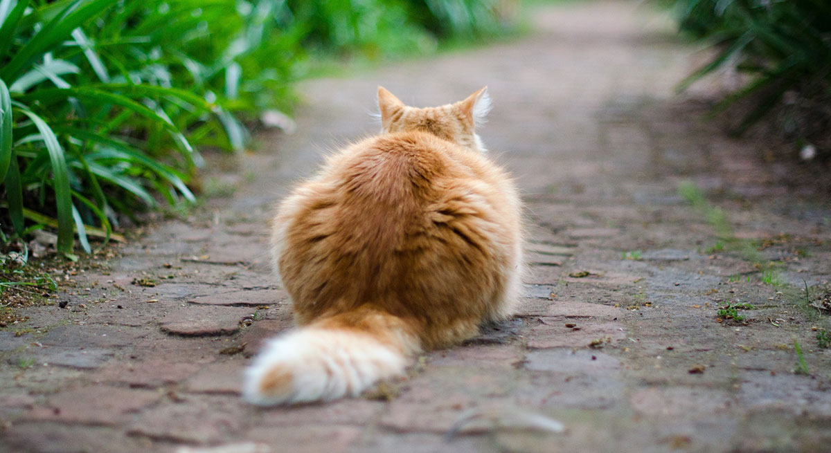 Cat Tip Of Tail Twitching