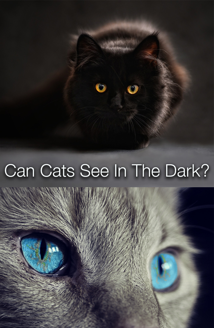 Are cats nocturnal and can cats see in the dark