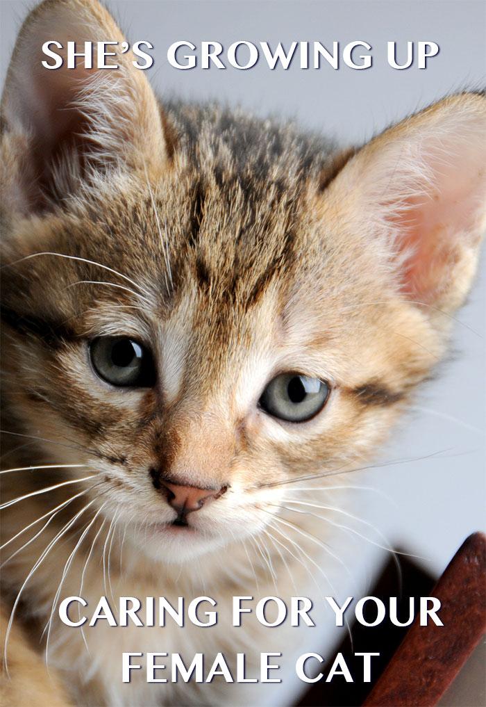 female-kitten-growing-up