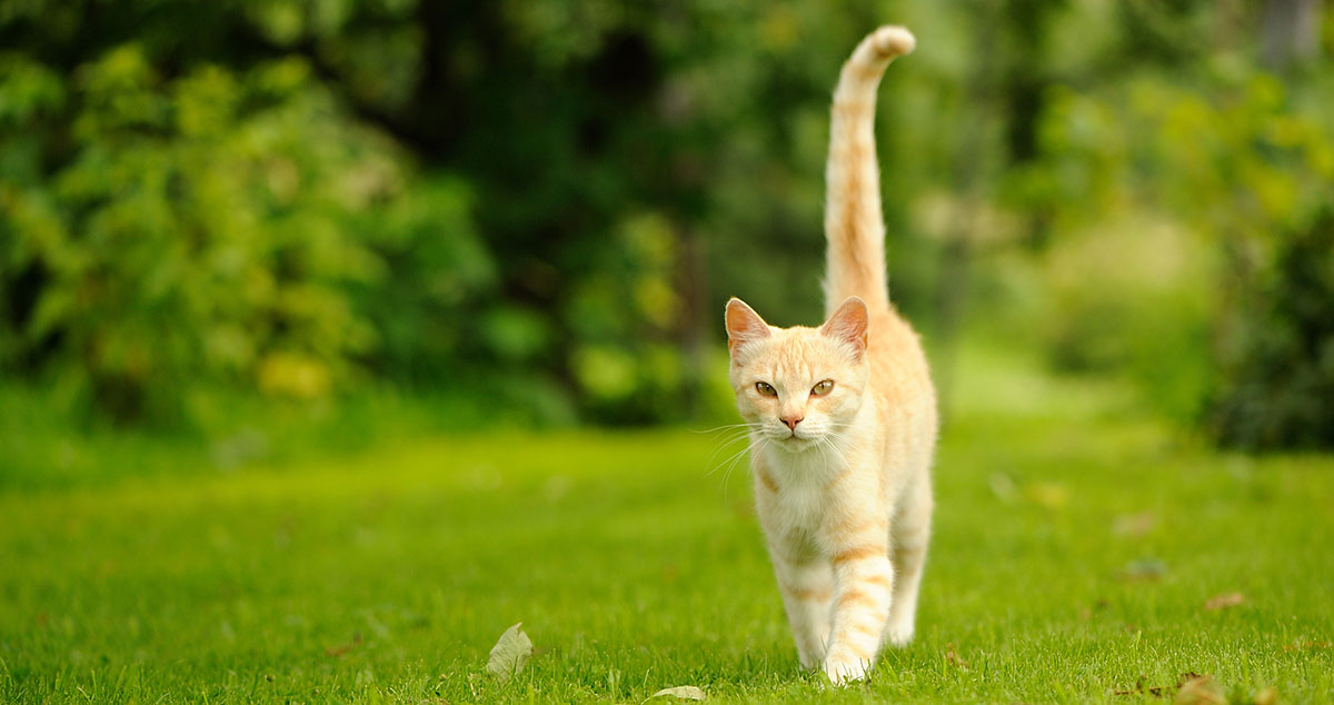 What does it mean when cats wag their tail?