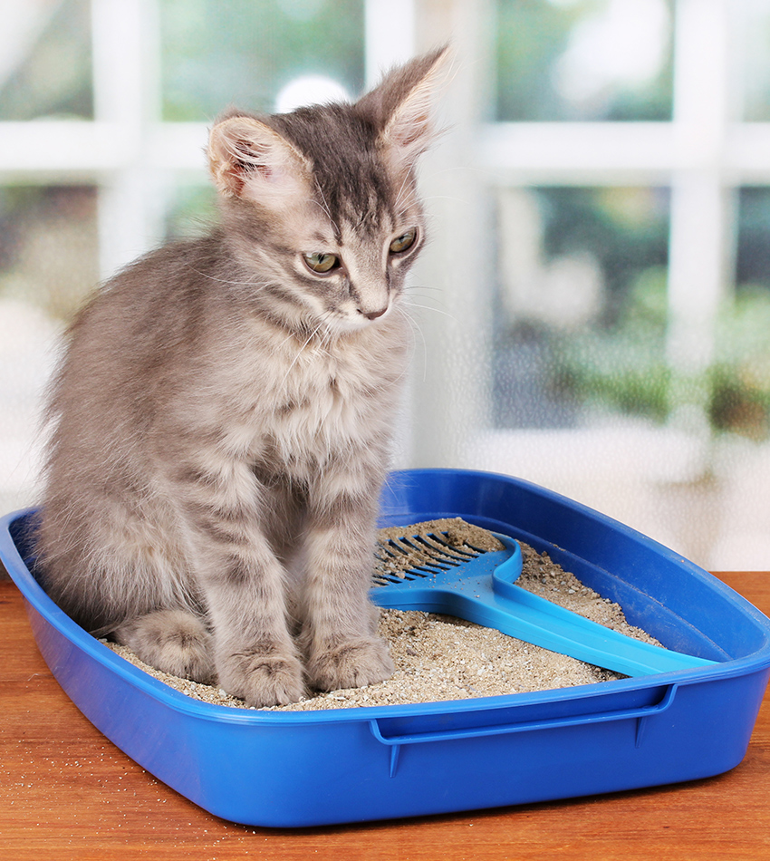 Complete Guide To Potty Train A Kitten