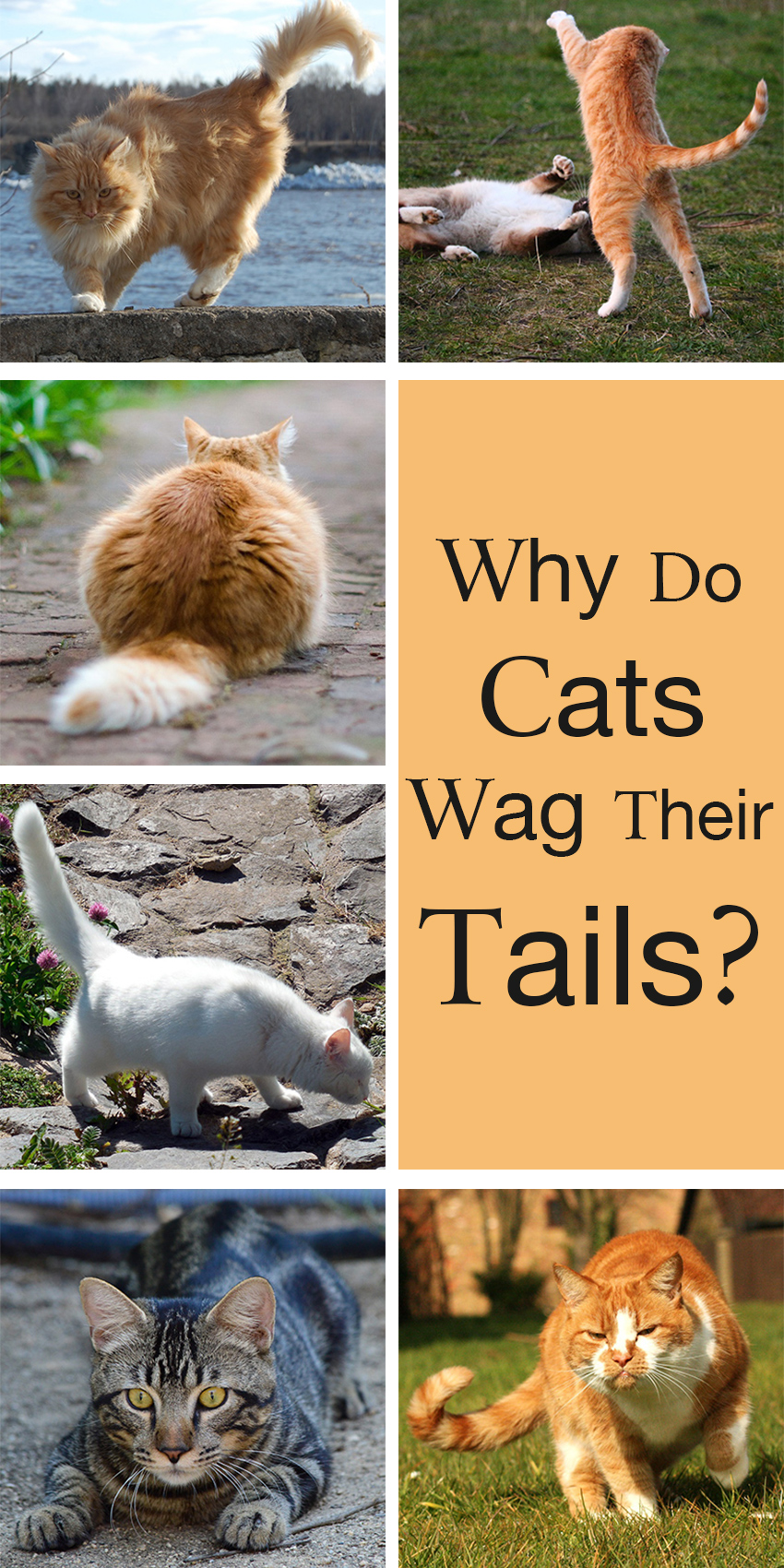 A Guide To Cat Tail Language