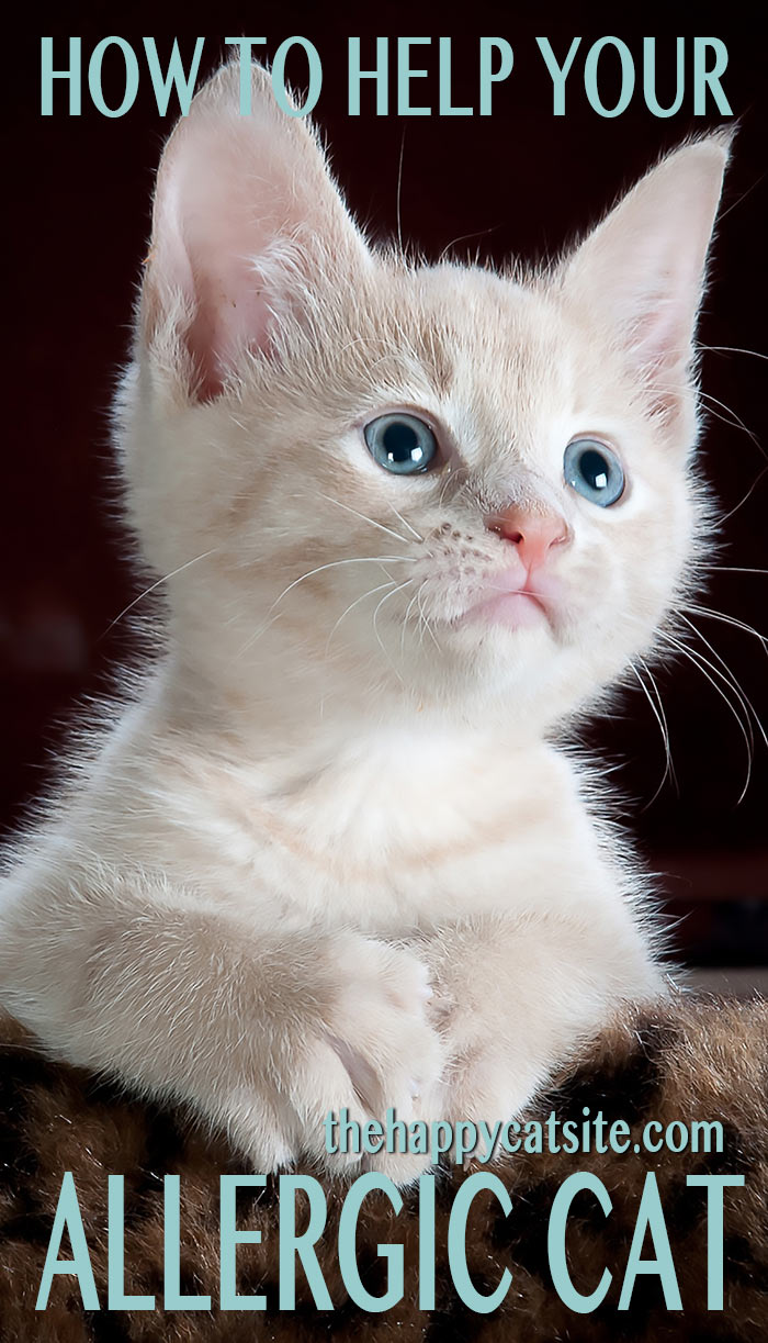 how to help your allergic cat. Allergy causes, symptoms, treatment and prevention