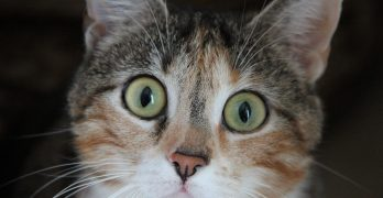 Can Cats Have Allergies?
