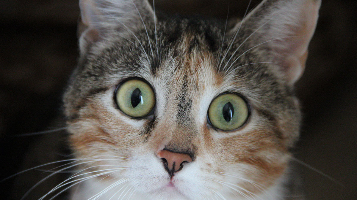 We answer all your questions on allergies in cats.
