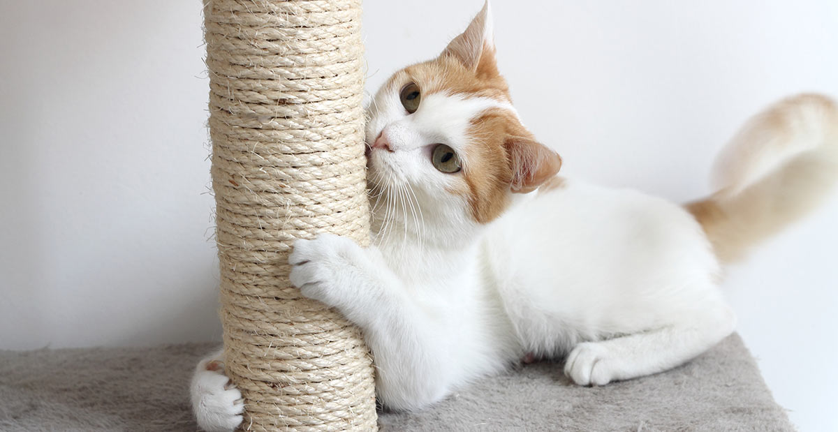 Miraculous How To Stop Cats From Scratching Furniture The Happy Cat Site Interior Design Ideas Gresisoteloinfo