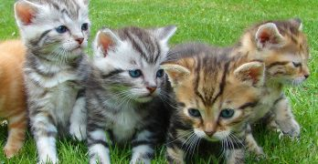 Cat vaccinations, costs, safety and kitten vaccination schedules