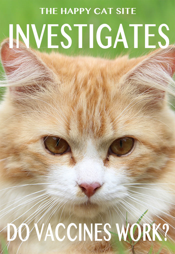 Kitten vaccination deals