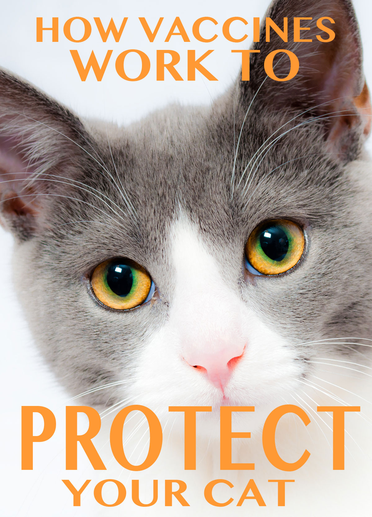 how vaccines work to protect your cat from disease
