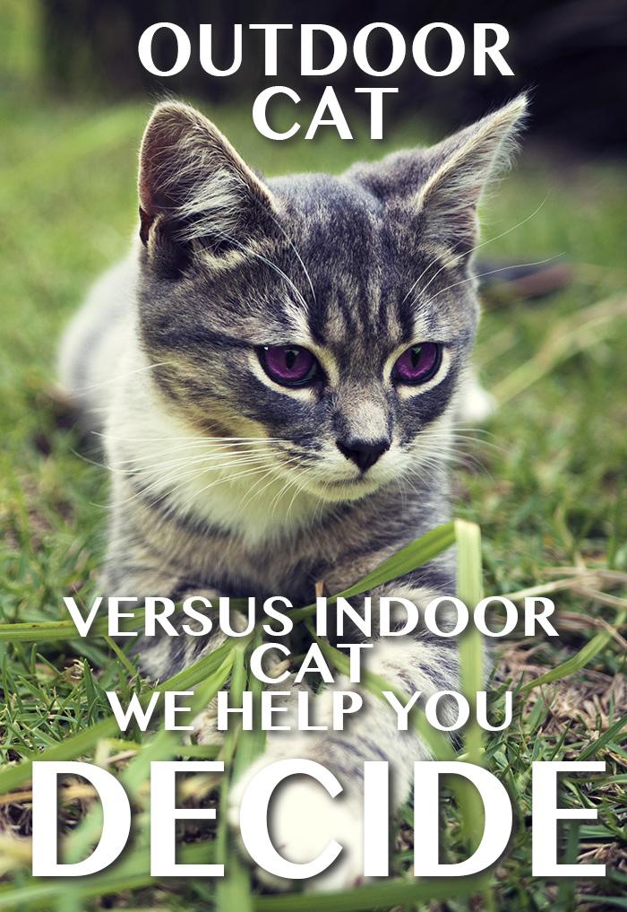 outdoor-versus-indoor-cat
