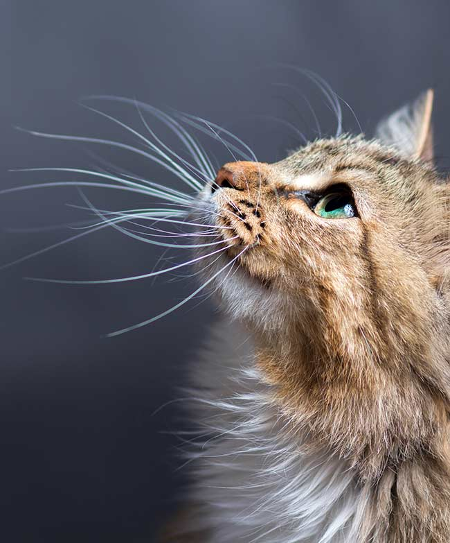 Why do cats whiskers fall out and does it really matter