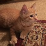 Worming And Whistling: Billy The Kitten At Nine And A Half Weeks