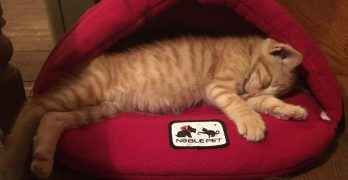 New Kitten Day 7 – Training Billy To Come