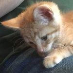 Nine Week Old Kitten: Learning Not To Bite