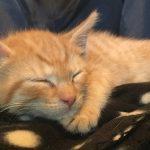 New Kitten Day Three – Allergy Alert!