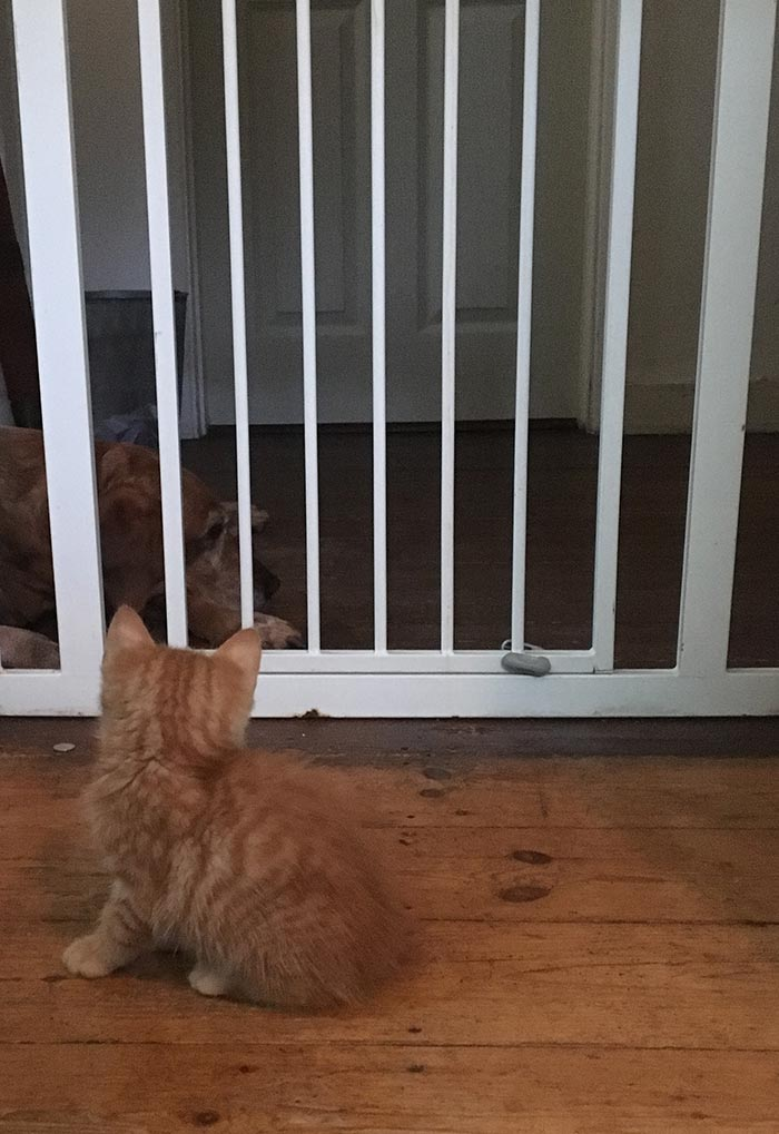 Billy meets Tess through the baby gate