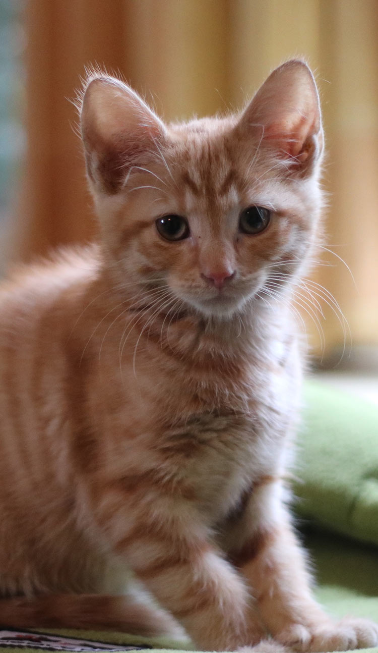 Billy the kitten has M for Marmalade written on his forehead. Very appropriate as ginger cats are also called Marmalade cats here in England