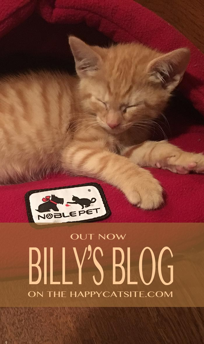 Catch up with Billy the Kitten and his adventures on The Happy Cat Site