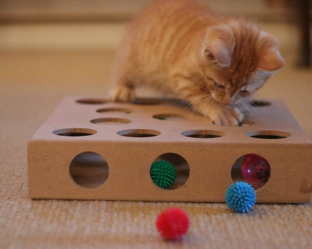 Billy loves this puzzle toy