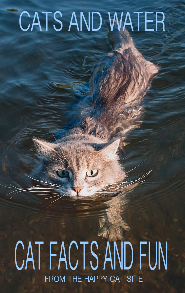 Can cats swim? The truth about cats and water. And how to get your cat interested in swimming