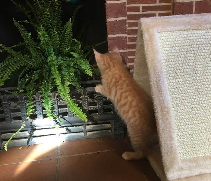 kitten-exploring