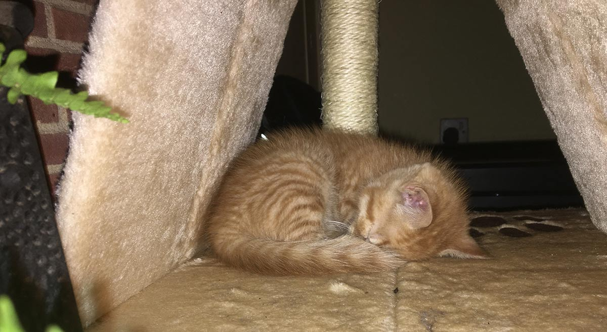 kitten-in-scratch-post