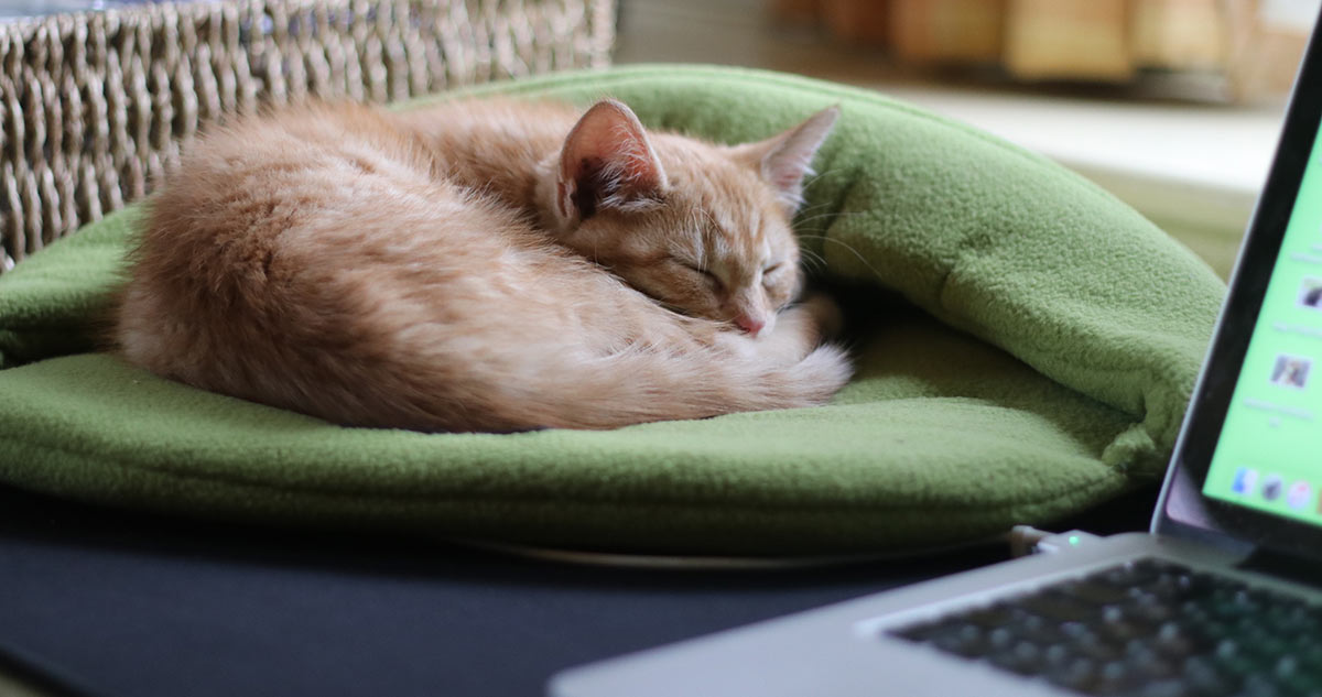 sleeping-on-my-desk