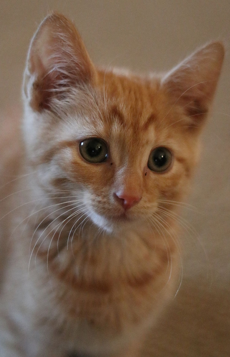 Billy the kitten gets his shots - find out how he got on