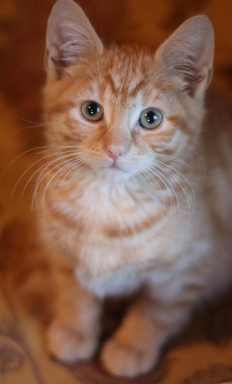 What will happen to Billy if his new owner is allergic to kittens!