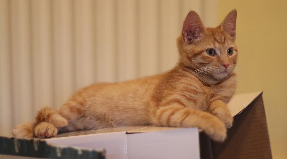 best flea treatment for kittens uk