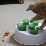 Fifteen Week Old Kitten – Billy Tests The Catit Toy