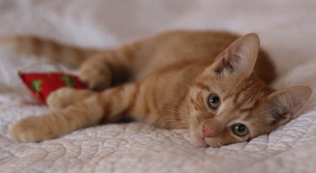 Ginger kitten on bed