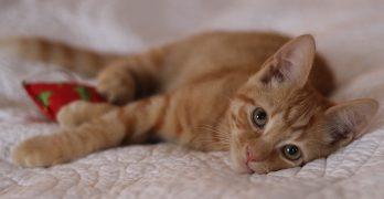 Sixteen Week Old Kitten – On The Loose