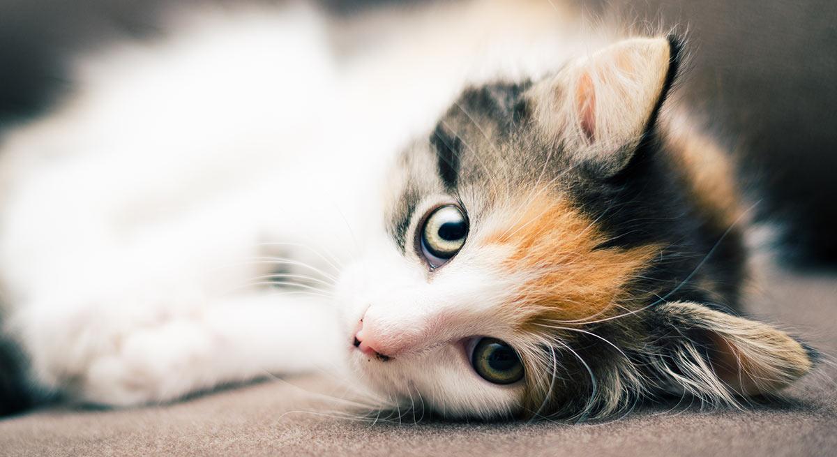 top rated kitten food brands