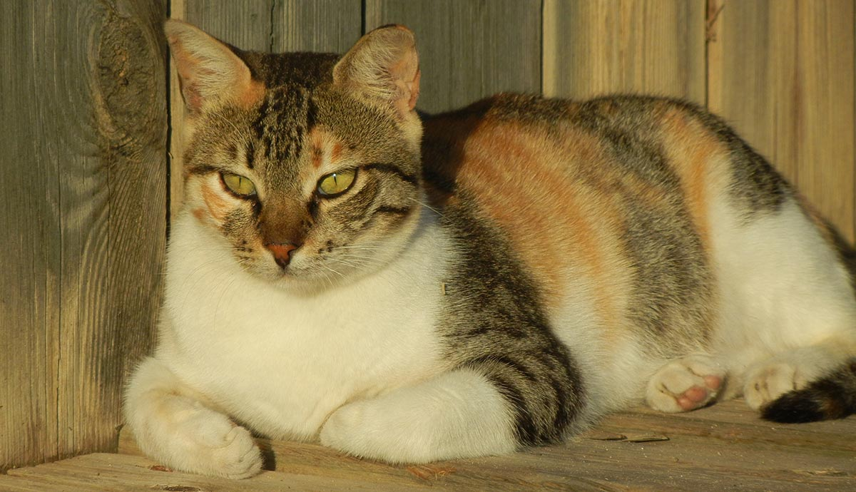 are all tortoiseshell cats female