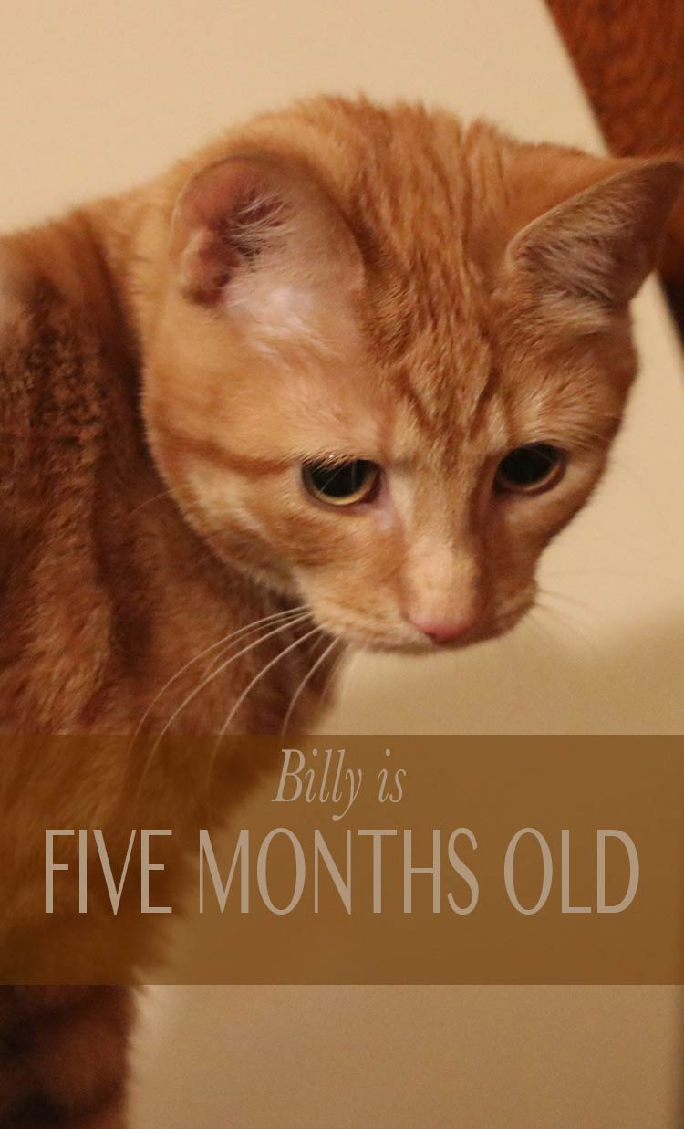 Catch up with Billy the kitten as he reaches five months old