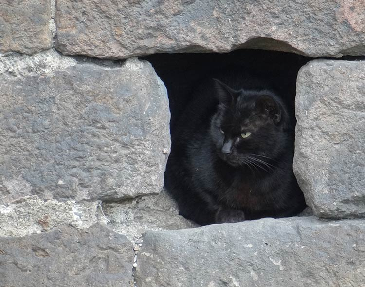 street cat sleeping in a wall