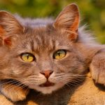 What Causes Cat Dandruff – And Best Ways To Treat It