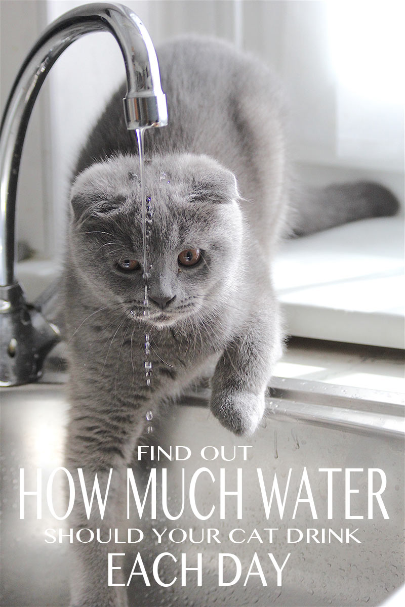 My cat is drinking a lot of water! A cat drinking a lot of water, or water from unusual places may need a check up from the vet